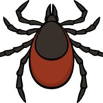May 24th at 7pm - Tick and Tick-Borne Diseases Workshop