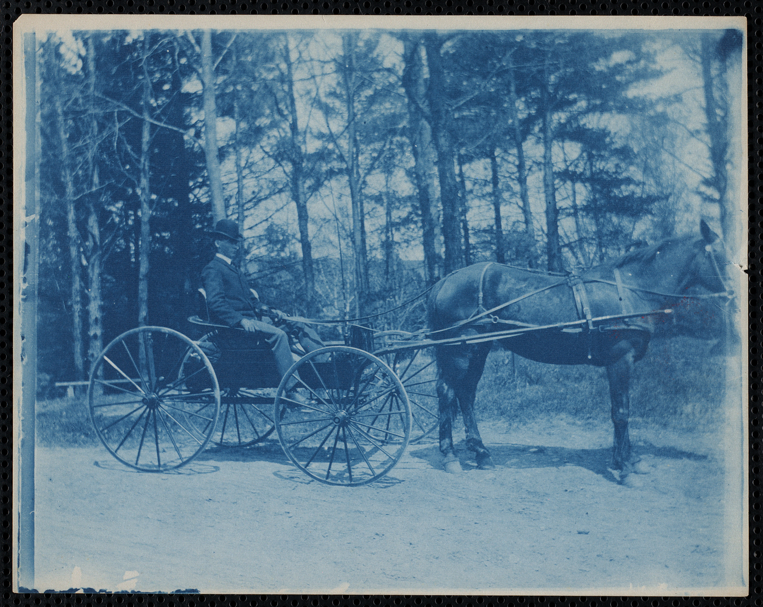 Man seated in a horse-drawn buggy, undated