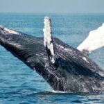 January 13th at 3:30 - Virtual Whale Watch