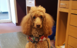 October 14th at 3:00 - Cooper the Library Dog!