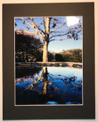 A tree in fall with it's reflection in a pond.