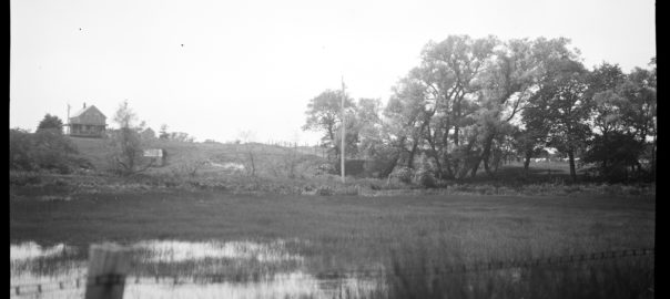 View of wetlands and trees around a spring.